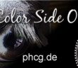 PHCG_Banner
