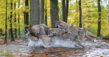 Wolfsblut_IMG