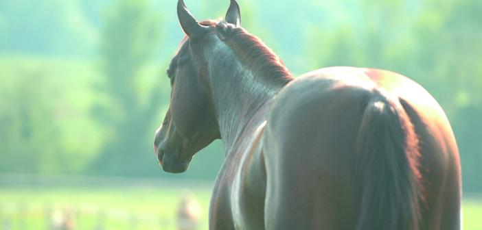 Mein Lieblingspferd, mein Ehemann & ich…