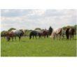 YB_Horse_Market_6_16