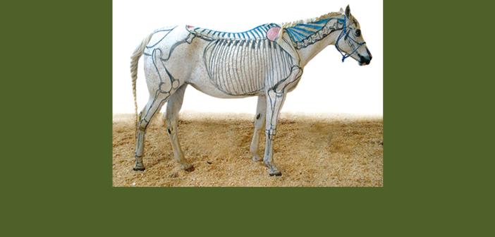 Der Pferderücken…. …er ist von größter Wichtigkeit, bleibt aber weitgehend unverstanden